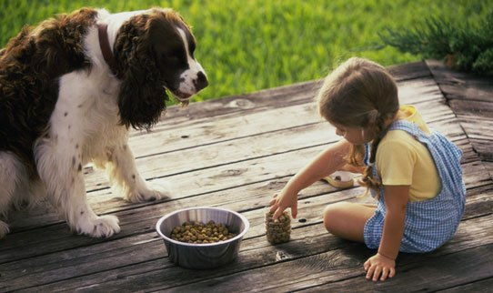 Can You Teach Free Feed To Old Dog