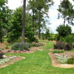 How to keep your lawns and plants properly hydrated
